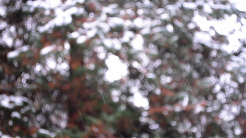 Snowflakes falling rapidly in a pine forest 02 Footage