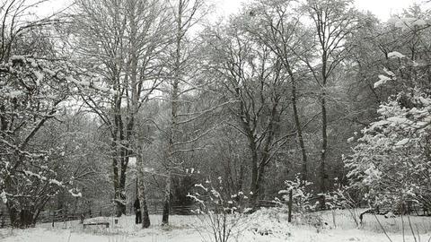 Cut down a tree in winter Footage