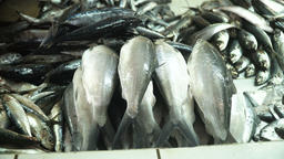 Fish in Asian market Footage