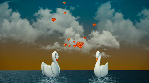 [alt video] Couple of swans