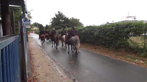 Group of pilgrims who go riding on the road to Santiago de Compostela 93 Footage