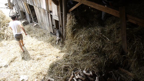 Men who move hay which is brought in a cart in a barn yard 13b Footage