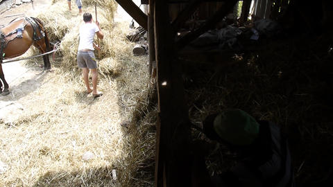 Men who move hay which is brought in a cart in a barn yard 15 Footage