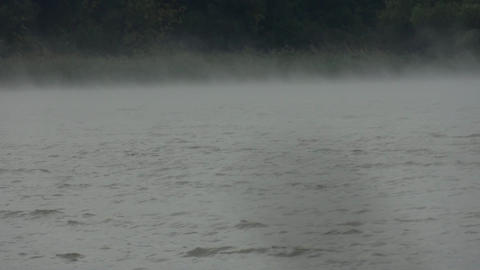 Mist that rises from the water the forest blown by wind 12 Footage
