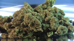 Medical Marijuana In A Big Pile stock footage