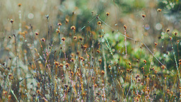 Dew on marsh stems and bokeh background Footage