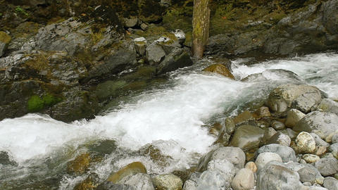 Slow Motion Forest River Flowing Over Small Waterfalls Footage