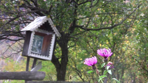 Purple thistle flowers and the wayside crucifix near the forest 21 Footage