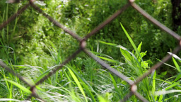 Grass Behind Wire 2 stock footage