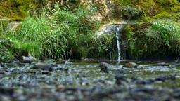 Shallow creek rapids Footage