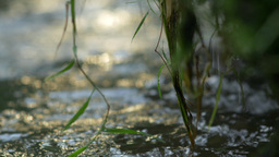 Macro shot of spring water dribbling from greenery Footage