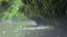 Small waterfall dribbles from a mossy rock Footage