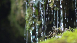 Tiny waterfall closeup dribbles on moss Footage