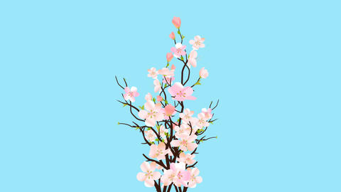 Easter Blossom Pink Sakura On Transparent Background Card or Commercial Template Animation