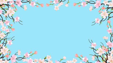 Spring Blossom Pink Sakura Frame Border On Transparent... Stock Video Footage