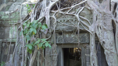 Ta Prohm temple in Angkor Wat, Cambodia Footage
