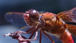medium macro drangonfly Footage