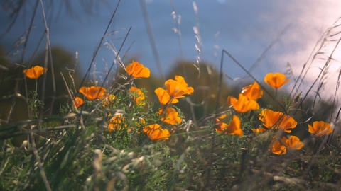 Flowers On Sunny Day stock footage
