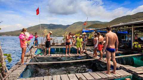 tourists watch fish breeding in pools at floating village Footage