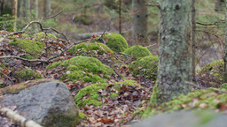 Dolly shot of a moss-covered rock formations Footage