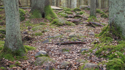 Dolly shot of a hiking trail amidst a mixed wood forest in the rock formations Footage