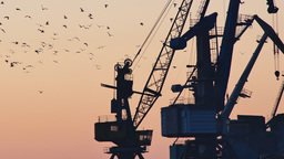 Silhouetted Harbor Cranes Loading Freight During Golden Hour stock footage