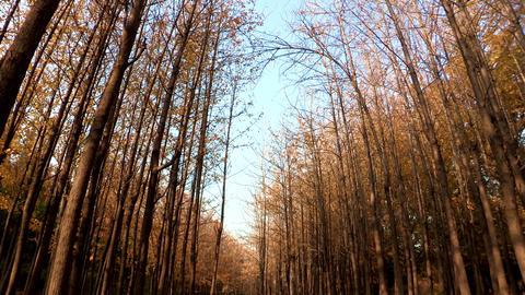 Seoul forest in Seoul, Korea Footage