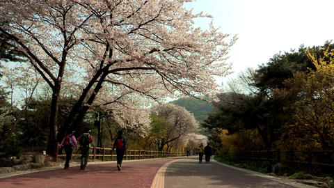 Landscape of Namsan Mountain in Seoul, Korea Live Action