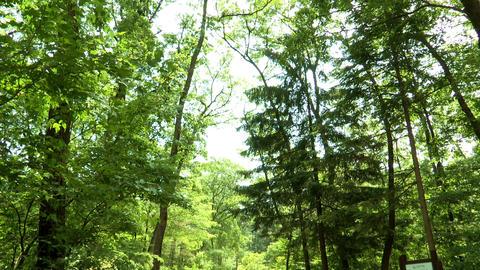 Landscape of Korea National Arboretum in Pochun-si, Gyeonggi-do Province, Korea Footage