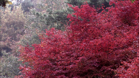 Autumn Landscape Of Korea stock footage