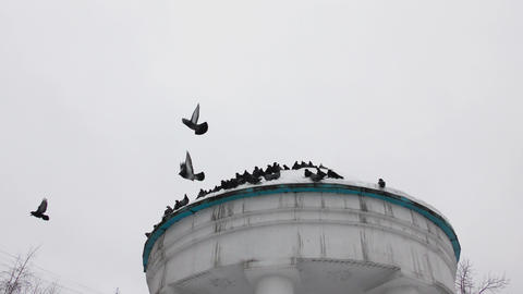 A Flock Of Pigeons Taking Off stock footage