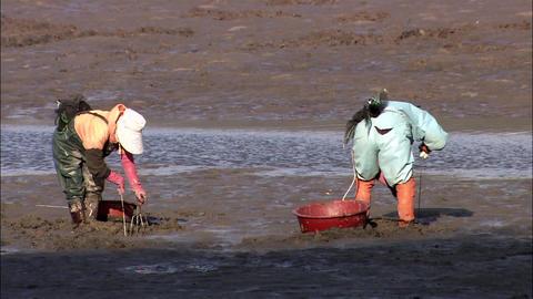 Seomjingang River in Gwangyang-si, Jeollanam-doProvince, Korea 실사 촬영