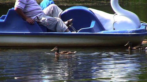 Flock of ducks follow a boat from which they were given food 05 Footage