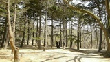 Exercise In Pine Forest.leisure,oriental,sport,people. stock footage