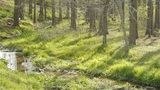 Weeds by the river,dense forest,woods,Jungle,shrubs,wetlands Footage