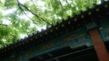 Chinese ancient building,carved-beams & painting-houses,breeze blowing leave Footage