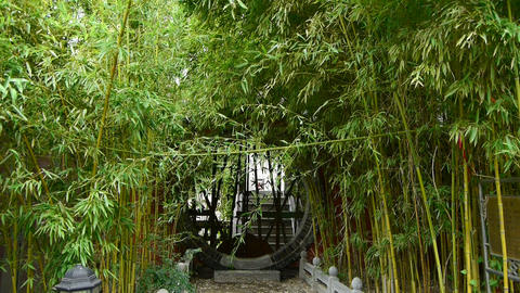 wind shaking bamboo forest,Oriental classical door,green... Stock Video Footage