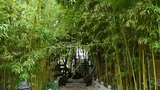wind shaking bamboo forest,Oriental classical door,green patio courtyard Footage