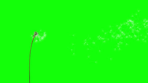 Dandelion on the wind (GreenScreen) Stock Video Footage