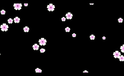 Cherry blossoms-1 Stock Video Footage