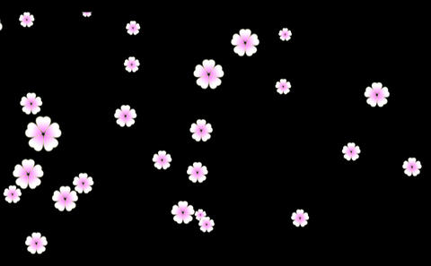 Cherry blossoms-1 Animation
