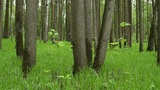 shady forest Footage