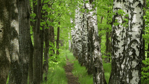 spring footpath Stock Video Footage