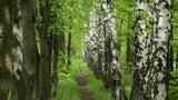 spring footpath Footage