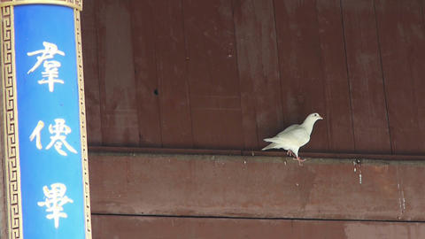 White doves under eaves.& Chinese ancient... Stock Video Footage