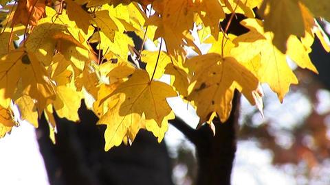 autumn 22 Stock Video Footage