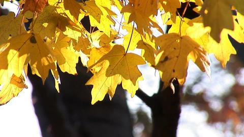 autumn 22 Footage