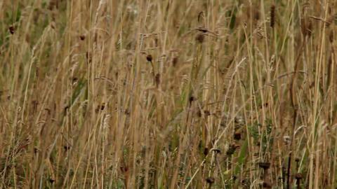 prairie Stock Video Footage