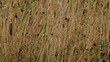 Prairie stock footage