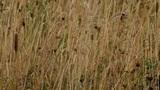 prairie Footage